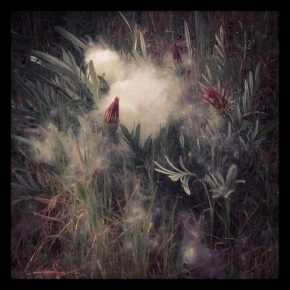 fluff from treetops fall on angel's knoll . photo by stacy elaine dacheux . 2013